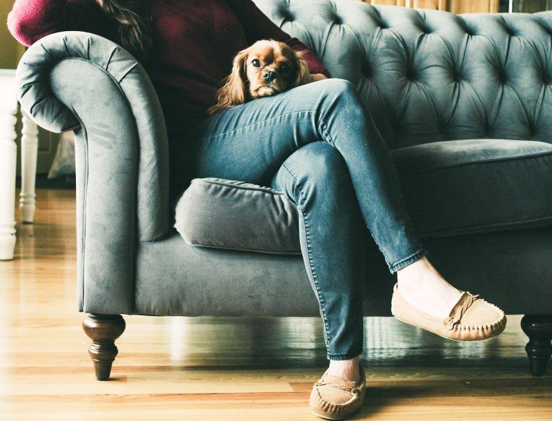 Introwertyk na kanapie w salonie z pieskiem